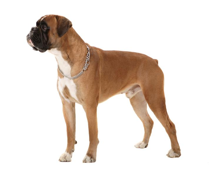 Mix Breed Dogs For Sale In India