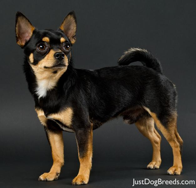 Little Brown And Black Dog Breeds