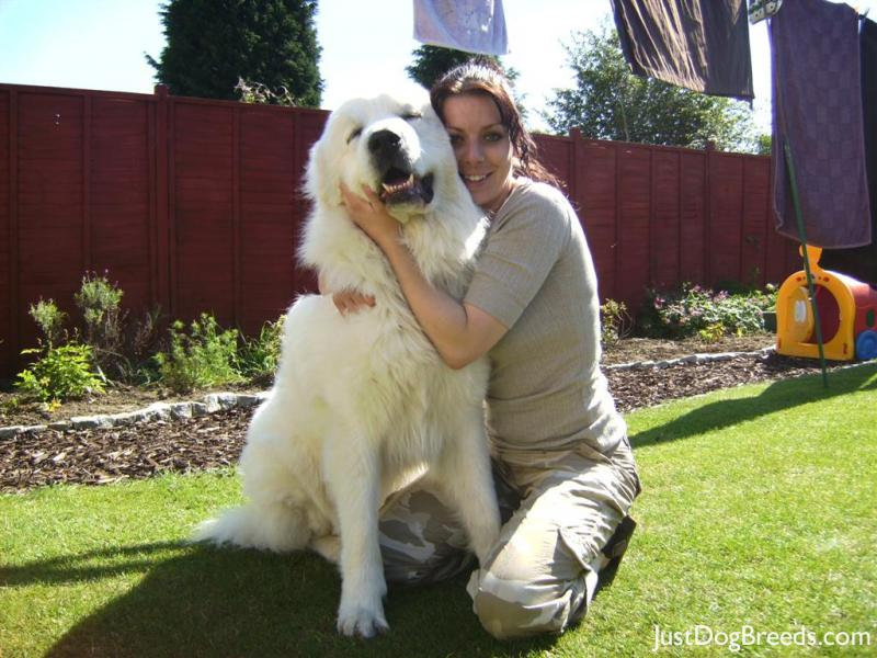 Great Pyrenees Dog Breed Selector